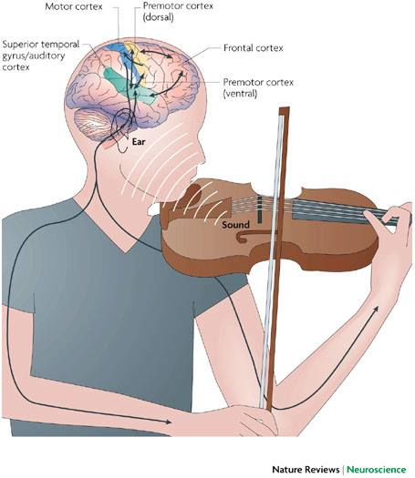 How professional musicians get cognitive advantages later in life